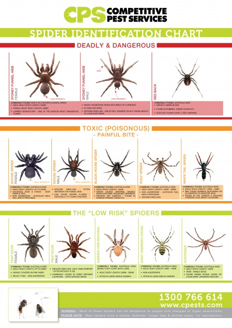 Spider Identification Chart