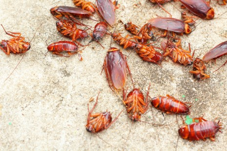 , How Can You Do Natural Pest Control?