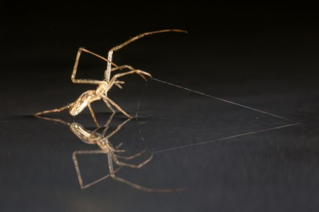 , Spiders use wind to sail across water like ships