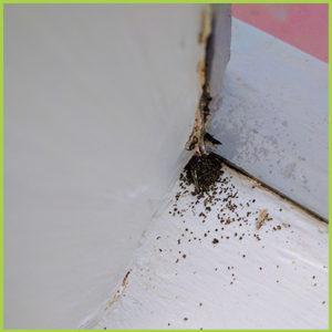 Termite Toilets