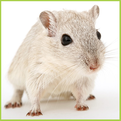 New product to make Car Wires may be attracting rats! _ Competitive Pest Services